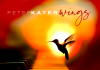 Inspirational elevating rejuvenating piano beauty Peter Kater
